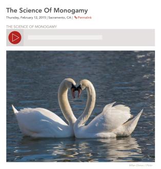 Science of Monogamy, Capital Public Radio